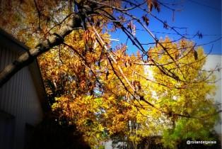Beautés de l'automne